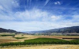 De Vallei van Wijngaarden Stock Foto