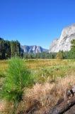 De Vallei van Yosemite Stock Foto