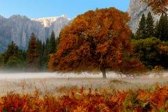 De Vallei van Yosemite royalty-vrije stock foto