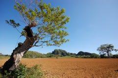De vallei Vinales in Cuba Royalty-vrije Stock Fotografie