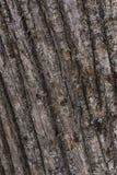 De van de achtergrond kastanjeschors V.N. het bos stock afbeelding