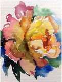 De van de achtergrond waterverfkunst aard verse kleurrijke gele rode thee nam bloem enige gevoelige romantische liefde toe stock illustratie