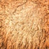De wol van de kameel Royalty-vrije Stock Fotografie