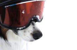 De Van een hond Sporten van Xtreme Royalty-vrije Stock Afbeelding