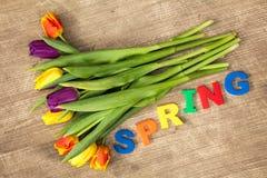 De van letters voorziende LENTE en kleurrijke tulpen Stock Afbeelding