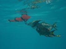 De Vangst van de dag, Caraïbisch Puerto Rico, Royalty-vrije Stock Afbeeldingen