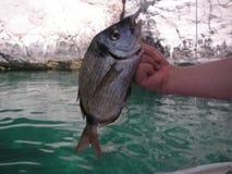 De vangst van vissen Stock Foto's