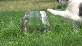 De vangstvissen van de gestreepte katkat van aquarium met water close-up 4K stock videobeelden