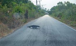 De Varanus rampement lentement sur la route, foyer sélectif photographie stock