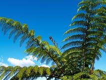 De varen van de boom, tegen blauwe hemel. Stock Afbeeldingen