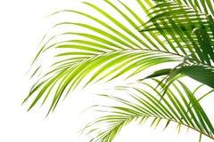De varenbladen die van de palm in de wind golven, royalty-vrije stock foto