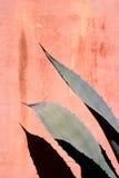 De Varenbladen en de Muur van de agave Stock Fotografie