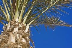 De varenbladen van de palm op blauwe hemel Royalty-vrije Stock Afbeelding
