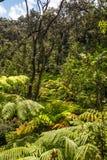 De varens in het regenwoud, Groot Eiland Royalty-vrije Stock Afbeelding