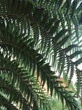 De varenvarenbladen sluiten omhoog in openlucht in bos Stock Foto's