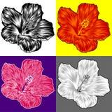 De variaties van de de bloembloesem van de hibiscus royalty-vrije illustratie