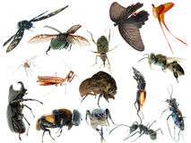 De vastgestelde inzameling van het insect stock afbeeldingen