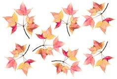 De vastgestelde rode en gele die esdoorn verlaat esdoornbladeren op witte achtergrond worden geïsoleerd royalty-vrije stock afbeeldingen