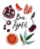 De vastgestelde vruchten van de waterverfillustratie bon appetit, Granaat, mandarin, grapefruit, kers, vrolijk geïsoleerd op witt stock illustratie