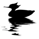 De vector eend van tekeningsvissen Stock Foto