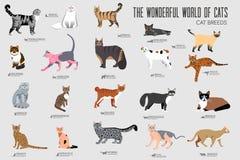 De vector geplaatste pictogrammen van rassenkatten Het leuke dierlijke ontwerp van het illustratieshuisdier De lay-out vlakke dek vector illustratie