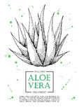 De vector getrokken illustraties van aloëvera hand De banner van aloëvera, pos vector illustratie