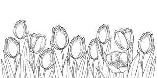 De vector horizontale grens met overzichtstulp bloeit, knop en overladen die bladeren in zwarte op witte achtergrond wordt geïsol royalty-vrije illustratie