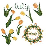 De vector isoleerde gele en oranje tulp op wit stock illustratie