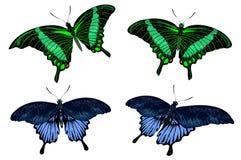 Mooie geïsoleerdes groene en blauwe vlinders Stock Foto's