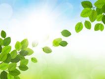 De lente met bladeren Royalty-vrije Stock Foto
