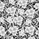 De vector naadloze uitstekende achtergrond van patroon witte bloemen Royalty-vrije Stock Afbeeldingen