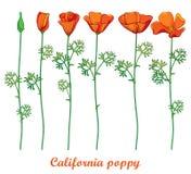 De vector plaatste met het geïsoleerde de papaverbloem van overzichts oranje Californië of zonlicht of Eschscholzia van Californi vector illustratie