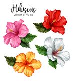 De vector realistische geplaatste bladeren van de hibiscusbloem Royalty-vrije Stock Foto