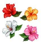 De vector realistische geplaatste bladeren van de hibiscusbloem Royalty-vrije Stock Afbeelding
