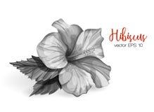 De vector realistische hibiscusbloem gaat zwart-wit weg Royalty-vrije Stock Fotografie