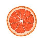 De vector realistische plak van de grapefruitcitrusvrucht Royalty-vrije Stock Afbeelding