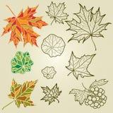 De vector reeks van de herfst doorbladert Stock Afbeeldingen