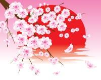 De vector tak van de kersenbloesem op de rode zon Royalty-vrije Stock Foto's