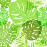 De vector transparante zomer van patroon groene tropische bladeren vector illustratie