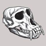 De Vector van de aapschedel Hand getrokken illustratie Royalty-vrije Stock Afbeeldingen