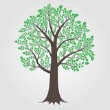 De vector van de boom Stock Foto's