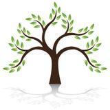 De vector van de boom Stock Afbeeldingen