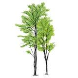 De Vector van de boom - Getrokken Hand Stock Afbeelding