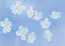 De vector van de de lentebloem Stock Fotografie