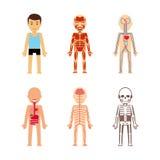 De vector van de lichaamsanatomie vector illustratie