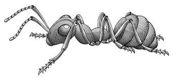 De vector van de mier Stock Afbeeldingen