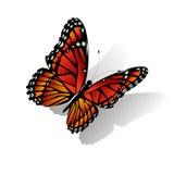 De vector van de Monarchvlinder Stock Fotografie