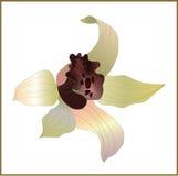 De vector van de orchidee Royalty-vrije Stock Afbeeldingen