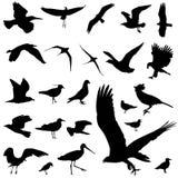 De vector van de vogel Stock Afbeelding