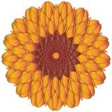 De Vector van de zonnebloem of van de Goudsbloem Royalty-vrije Stock Afbeelding